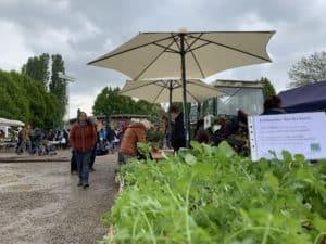 ProSpecieRara-Setzlingsmarkt beim Mundenhof in Freiburg. Kräuter, Stauden und Gräser aus Bioland-Anbau. Eichstetten vom Kaiserstuhl. Stefan Huthmann